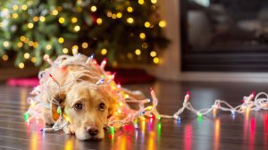 Holiday_Pet_Hazards