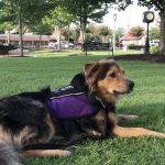 therapy dog Logan around woodstock